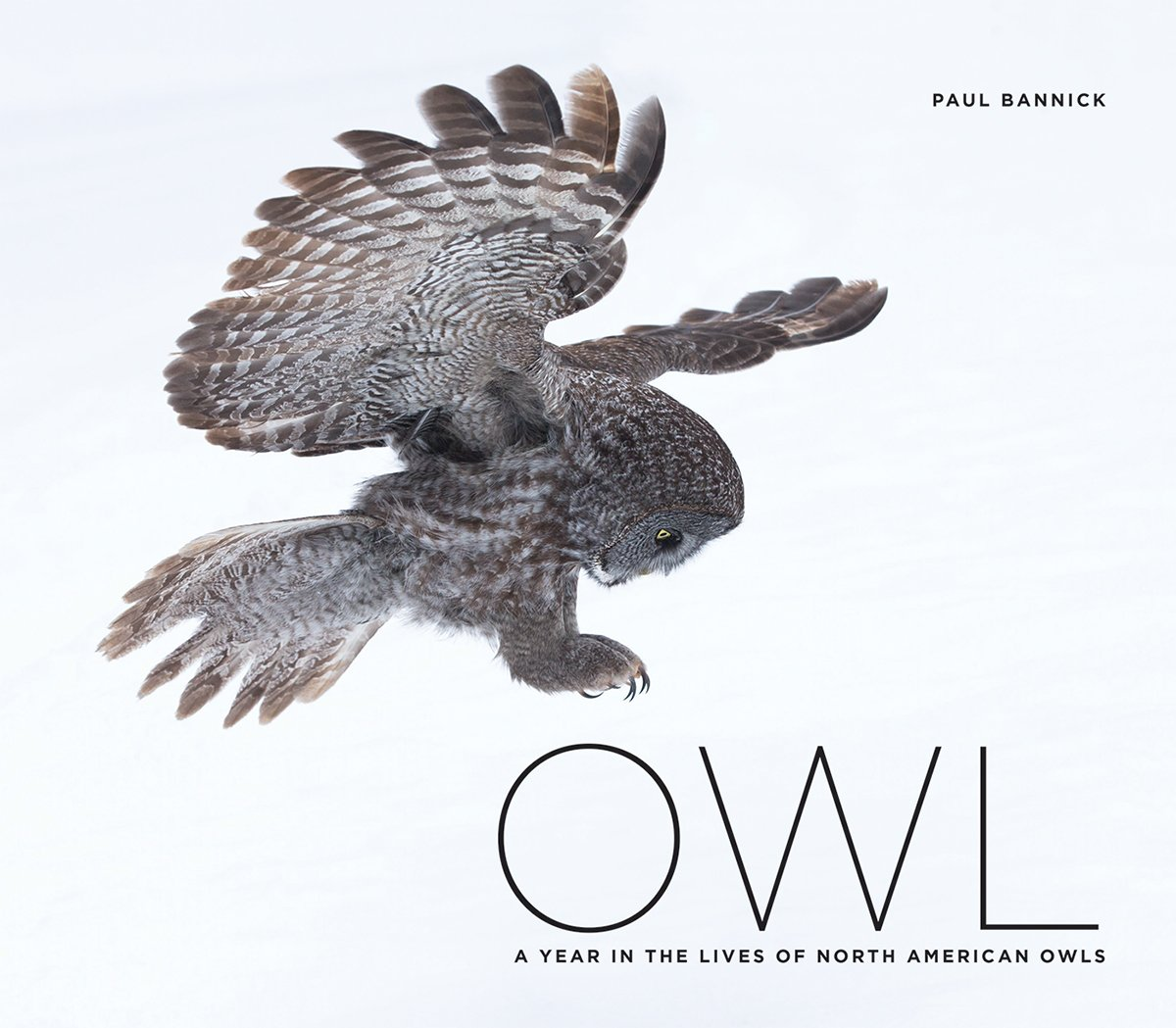 Gold: Owl: A Year In The Lives Of North American Owls, By Paul Bannick  (braided River)